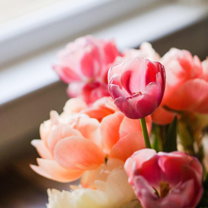 Por que dar Flores de Presente?