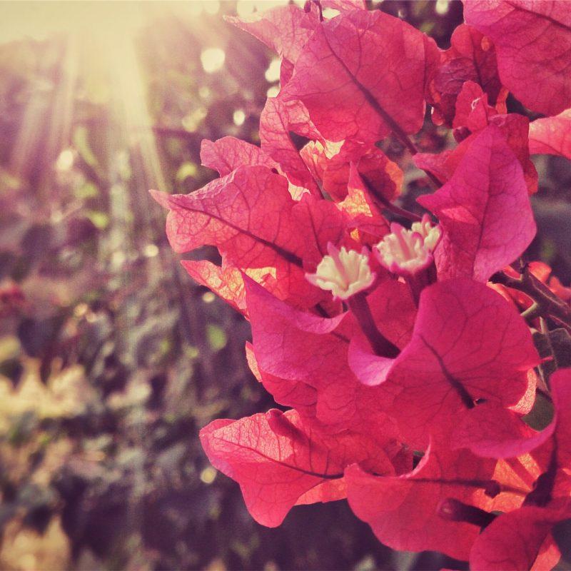 Parques floridos: dica para quem está fazendo intercâmbio