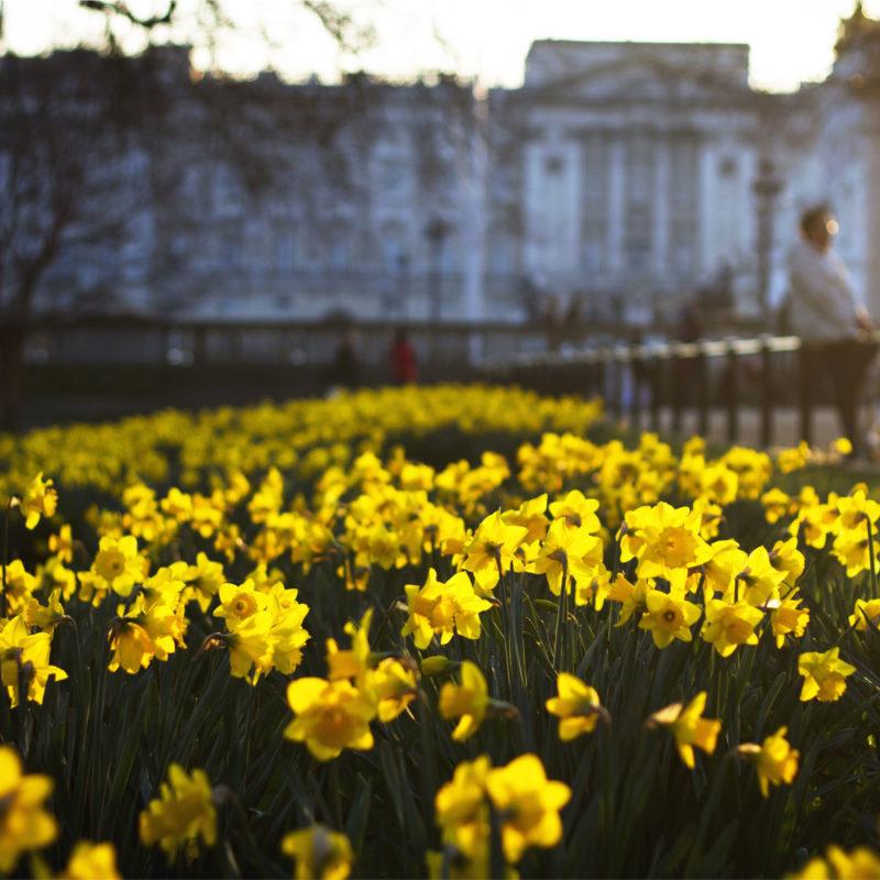 A energia da natureza: envie flores para quem está longe