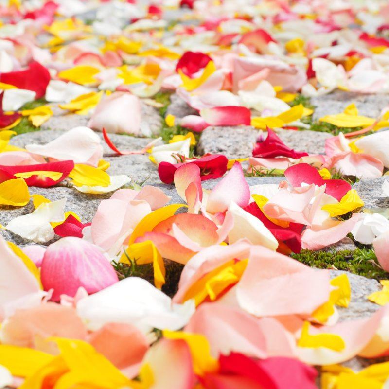 Significado das flores: banho com pétalas para o Ano Novo