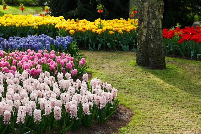 Flores da primavera no hemisfério norte