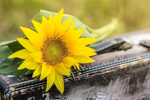 Envio de flores para o exterior no dia dos namorados