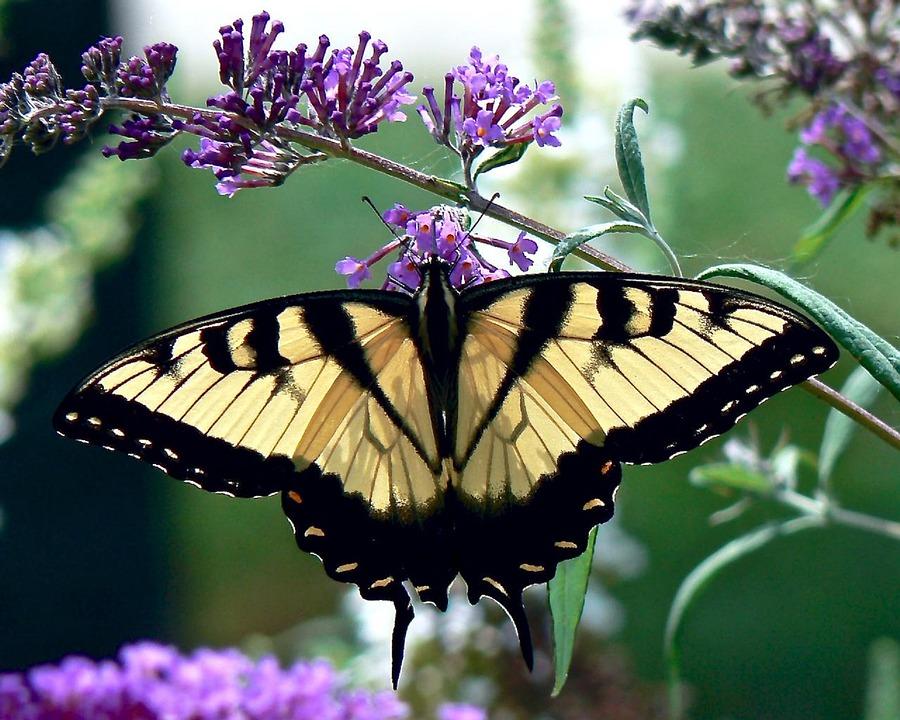 Flores para atrair beija-flores e borboletas: quais são?