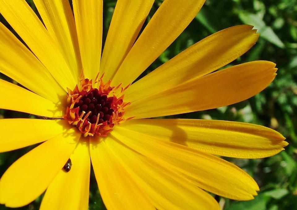Como tratar as doenças das plantas: saiba aqui quais são e como prevenir