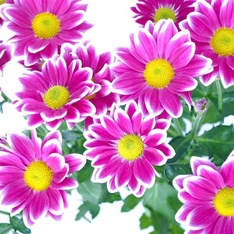 Flores para o Valentine's Day: conheça as mais populares e saiba como presentear quem você ama