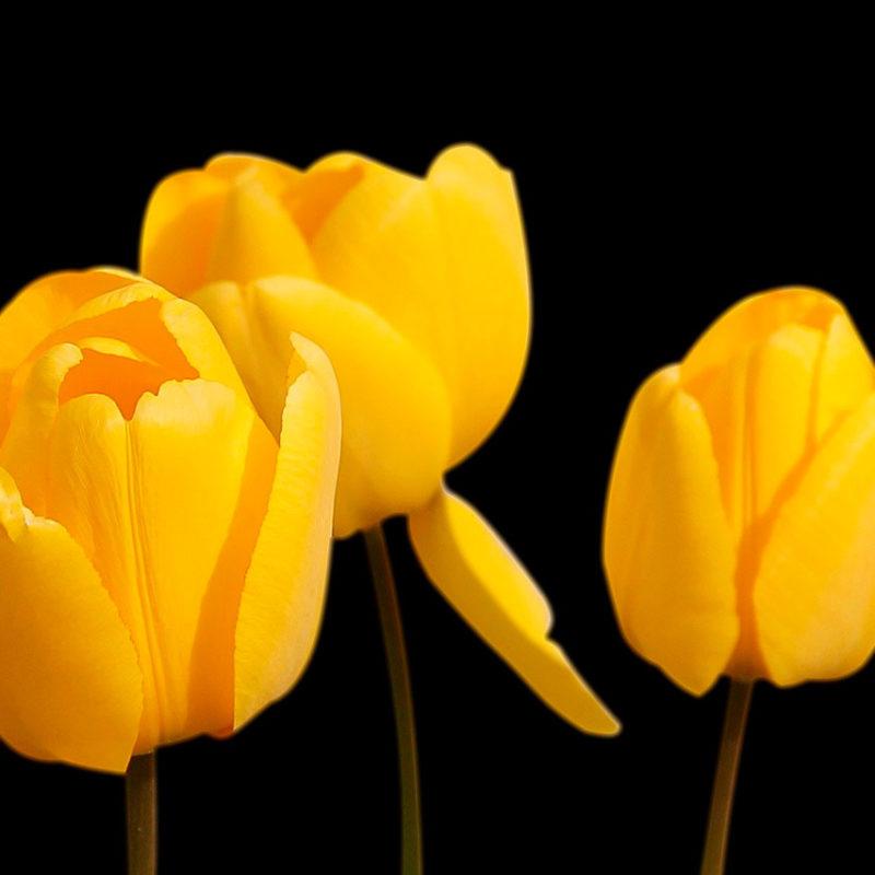 Flores para o Dia Internacional da Mulher: como presentear em cada caso