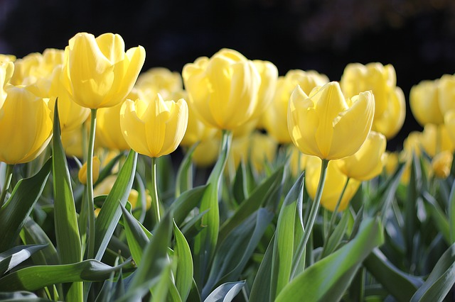 Flores para a páscoa: Seis dicas para presentear e compor arranjos florais para a data