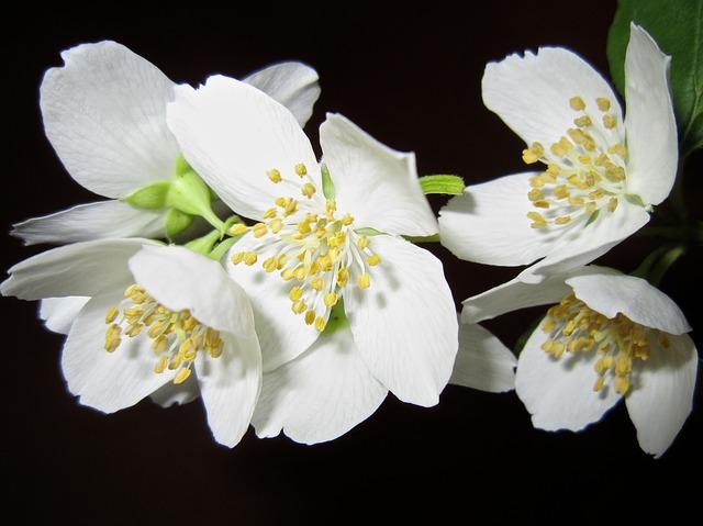 Flores da primavera: Conheça as espécies brasileiras que florescem na estação