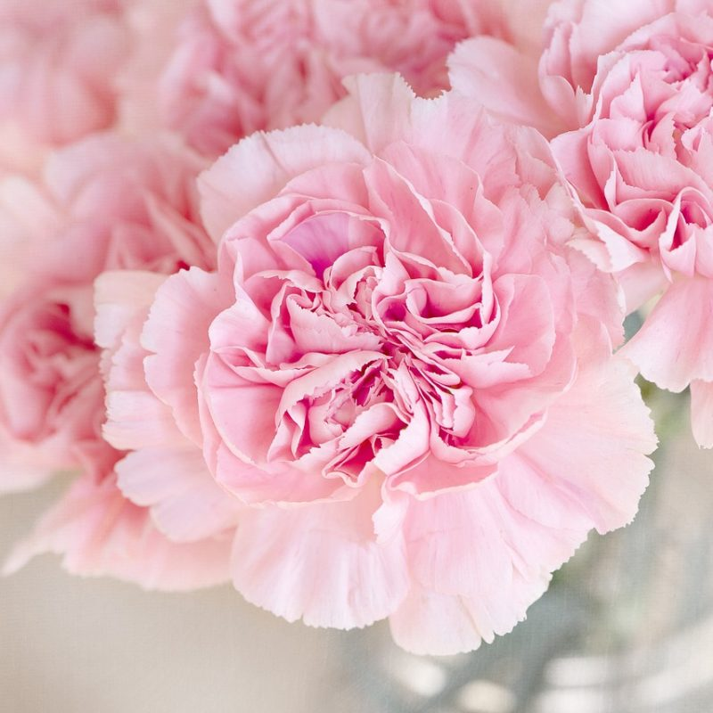 Cinco razões pelas quais você deveria presentear com flores em qualquer momento da vida