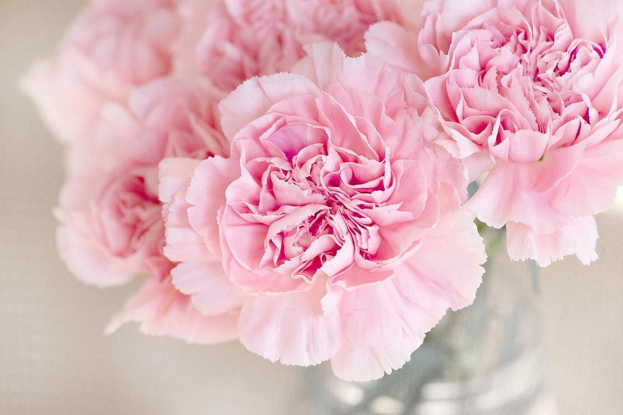 presentear com flores