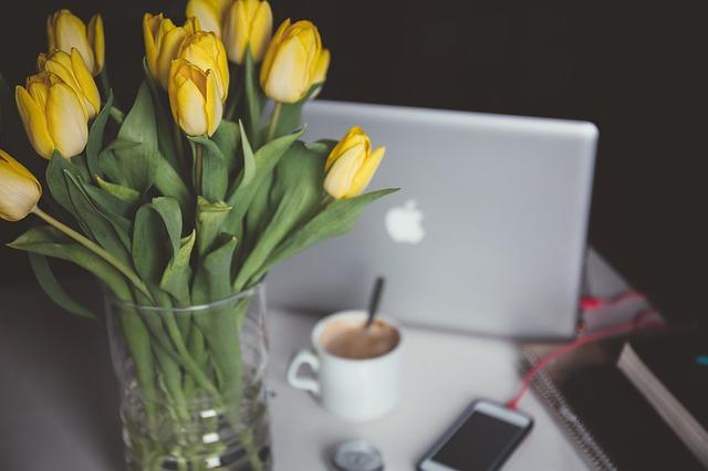 Quais são as melhores flores para se cultivar em casa?