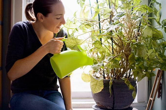 5 erros mais comuns na hora de cuidar das plantas