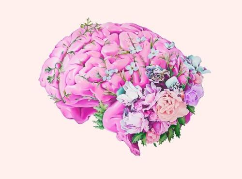 O cérebro que anseia por uma gratificação carinhosa!